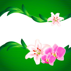 Beautiful Lily and Orchid background
