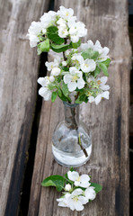 apple blossoms in vase