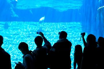 People taking photos in aquarium.