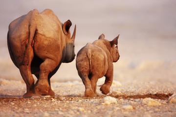 Foto op Aluminium Neushoorn Black Rhinoceros baby and cow