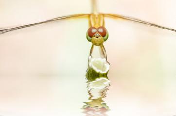 dragonfly macro in garden