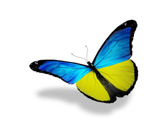 Ukrainian flag butterfly flying, isolated on white background