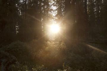 Early morning sun shining through dark forest