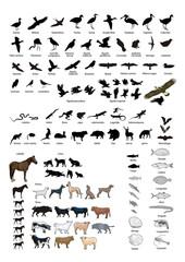 Lote de Animales y Siluetas
