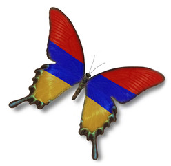 Armenia flag on butterfly