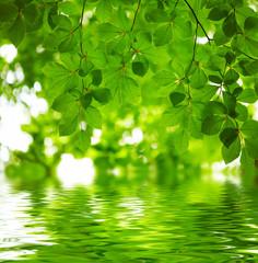 Fototapete - Green leaves background