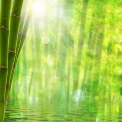 Bamboo forest. Abstract summer backgrounds with bright sun and b
