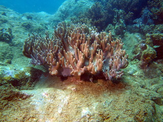 Soft coral, area of the city of Nha Trang, Vietnam