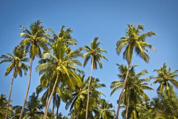 beautiful palm trees against blue sunny sky