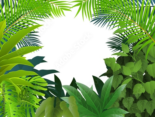 quottropical forest backgroundquot stock image and royaltyfree