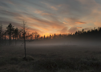 Fog over marsh, wide angle photo, southern of Sweden