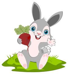 Bunny and radish