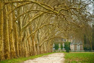 Amazing trees.