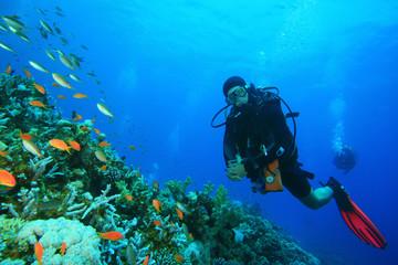 Scuba Diver explores a coral reef in the Red Sea