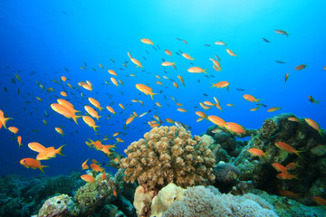 Aluminium Prints Under water Coral Reef and Tropical Fish