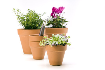 Flowers and garden tools, pots and can