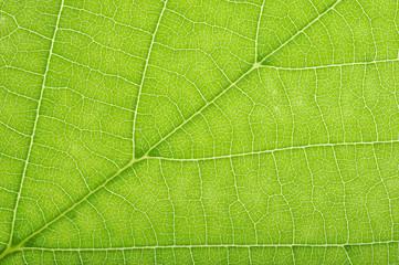 Grüne Adern