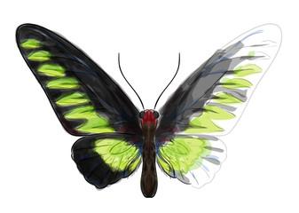 Butterfly Troganoptera Brookina.