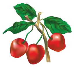 """Three cherries on a branch"""