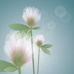Flower Clover in the morning / Soft floral background