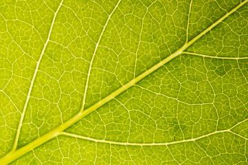 Nahaufnahme grünes Blatt