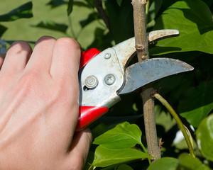 Pflanzen beschneiden
