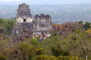 ancient mayan ruins in jungle Tikal