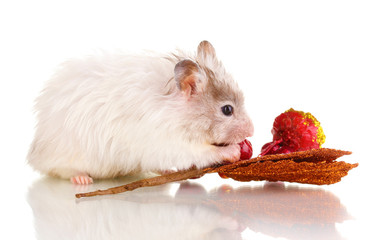 Cute hamster and autumn twig isolated white