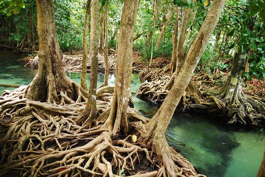 Khlong Song Nam clear tropical stream, Krabi, Thailand