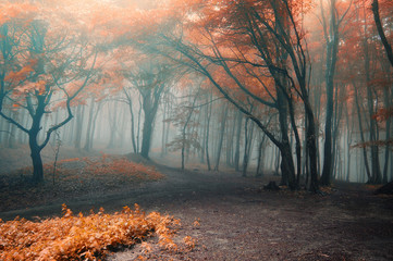 Foto op Canvas Bos trees with red leafs in a forest with fog