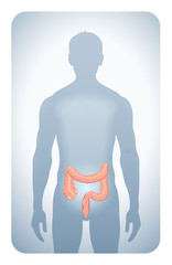 colon highlighted on the silhouette of a man