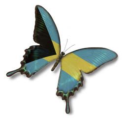 Bahamas flag on butterfly