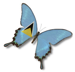 Saint Lucia flag on butterfly