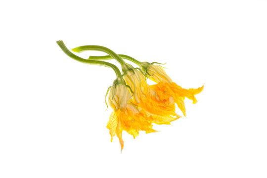 Zucchini Flowers On White