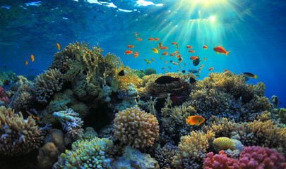 Photo Blinds Coral reefs Underwater view