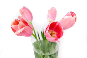 flowers isolated on white. tulips