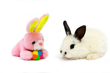 white bunny with a pink teddy rabbit