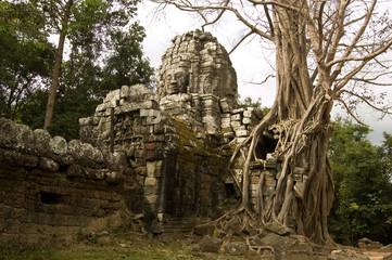Khmer Ruin and jungle, Angkor, Cambodia
