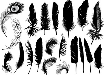 twenty black isolated feathers
