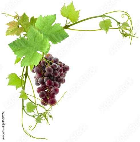 grappe de raisin et feuilles de vigne photo libre de droits sur la banque d 39 images. Black Bedroom Furniture Sets. Home Design Ideas