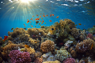 Wall Murals Coral reefs Coral reef