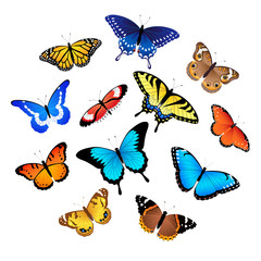 Printed kitchen splashbacks Butterflies Collection of butterflies