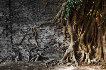 tree roots in wall