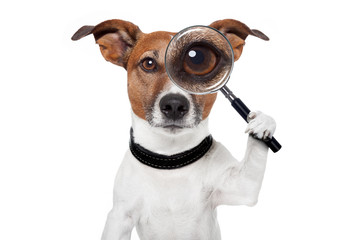 searching dog with magnifying glass