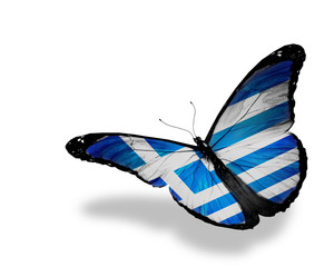 Greek flag butterfly flying, isolated on white background