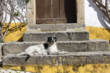 old dog on stairs, Obidos, Portugal