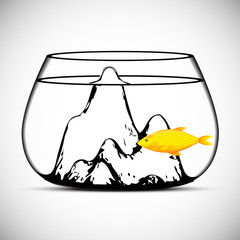 Gold fish isolated on a white