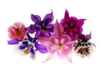 Colombine flowers