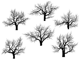 Silhouettes of oak trees without leaves.