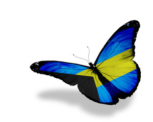 Bahamian flag butterfly flying, isolated on white background